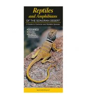Reptiles and Amphibians of the Sonoran Desert