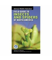 Field Guide To Insects Spiders National Wildlife Federation