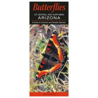 Butterflies Of Central And Northern Arizona; A Guide To Common And Notable Species