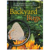 Backyard Bugs: An Identification To Common Insects, Spiders And More