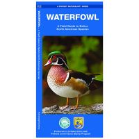 Pocket Naturalist Guide: Waterfowl: A Field Guide To Native North American Species