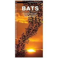 Bats: A Folding Pocket Guide To The Status Of Familiar Species