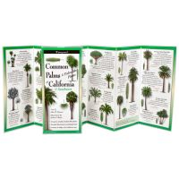 Common Palms & Cycads Of The Southwest & California