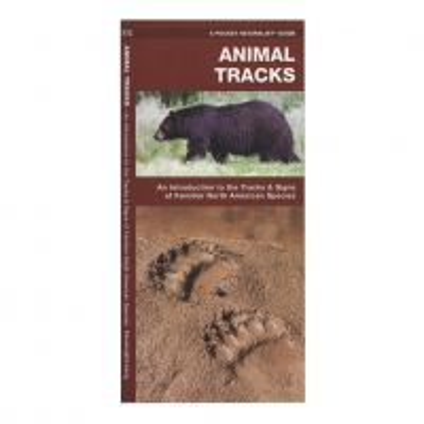 Animal Tracks: An Introduction to the Tracks